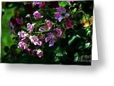 Rose Garden 2 Greeting Card