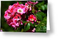 Rose Garden 4 Greeting Card