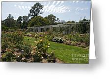 Rose Garden At The Huntington Library Greeting Card