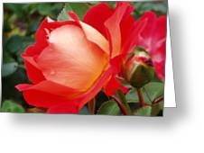 Rose Garden Red Square-3 Greeting Card by Janice Sakry