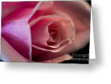 Rose -gentleness Greeting Card
