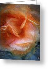 Rose Glows Greeting Card