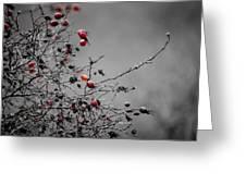Rose Hip Red Greeting Card