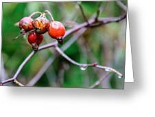 Rose Hip Wet Greeting Card