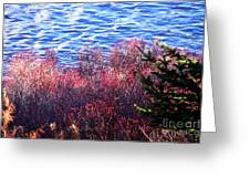 Rose Hips By The Seashore Greeting Card