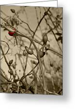 Rose Hips Greeting Card