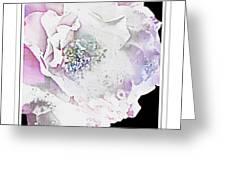 Rose In Pastels Greeting Card