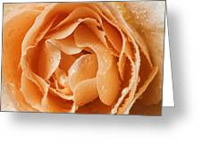 Rose In Rain Greeting Card