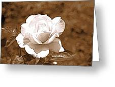 Rose In Sepia Greeting Card by Victoria Sheldon
