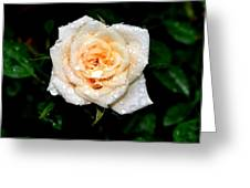 Rose In The Rain Greeting Card