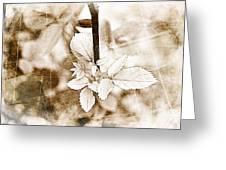 Rose Leaf Photoart Greeting Card