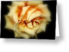 Rose Light Greeting Card