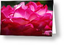 Rose Like A Lotus Flower Greeting Card