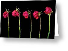 Rose Lineup Greeting Card