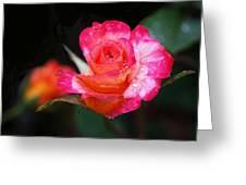 Rose Mardi Gras Greeting Card by Rona Black