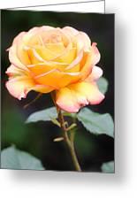 Rose Greeting Card by Melisa Meyers
