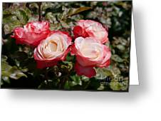 Rose Nostalgia  Greeting Card