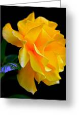 Rose Of Cleopatra Greeting Card