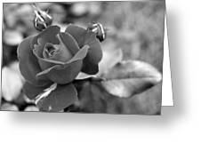 Rose Of Grace Greeting Card