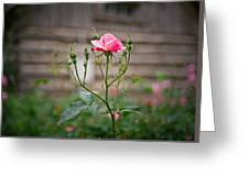 Rose Of Independence Greeting Card