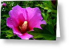 Rose Of Sharon 2 Greeting Card by Mark Malitz