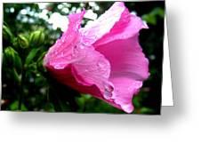 Rose Of Sharon 3 Greeting Card