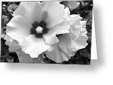 Rose Of Sharon - Detail B N W Greeting Card