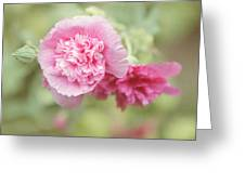 Rose Of Sharon Greeting Card