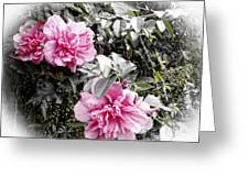 Rose Of Sharon-vintage Warmth Greeting Card