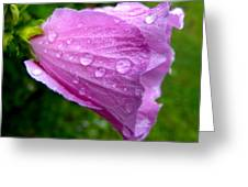 Rose Of Sharon With Rain Greeting Card
