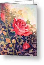 Rose On A Warm Day Greeting Card