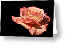 Rose On Black Background Greeting Card