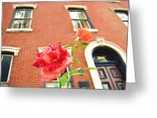 Rose On Brownstone Greeting Card