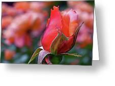 Rose On Rose Greeting Card