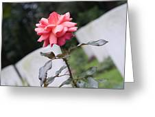 Rose On The Airborne War Cemetery Oosterbeek Netherlands Greeting Card