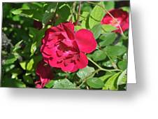 Rose On The Vine Greeting Card