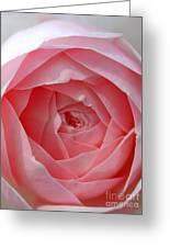 Rose Opening Greeting Card