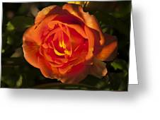 Rose Orange Greeting Card