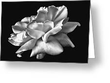 Rose Petals In Black And White Greeting Card