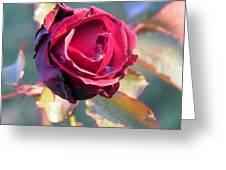 Rose Piangente Greeting Card by Halina Nechyporuk