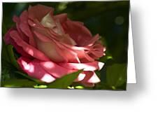 Rose Pink Greeting Card