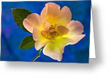 Rose Portrait Greeting Card