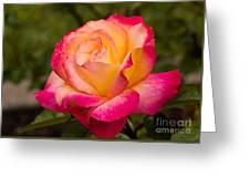 Rose Rainbow Sorbet Greeting Card