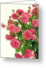 Rose (rosa Hybrid) Greeting Card