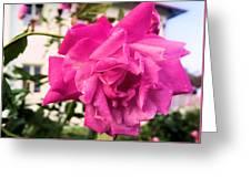 Rose Rose  Greeting Card