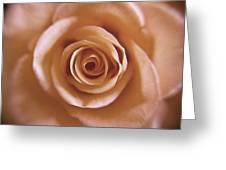 Rose Spiral 3 Greeting Card by Kim Lagerhem