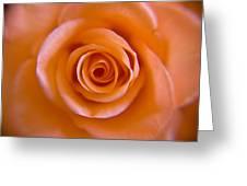 Rose Spiral Greeting Card by Kim Lagerhem