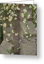 Rose Sprawling On Stone Greeting Card