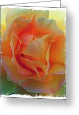 Rose Taken At Sunset  Greeting Card by Daniele Smith