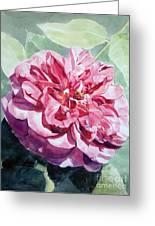 Watercolor Of A Pink Rose In Full Bloom Dedicated To Van Gogh Greeting Card